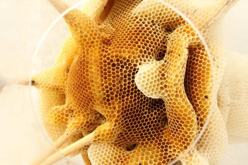 sculpture-abeille-ren-ri-03