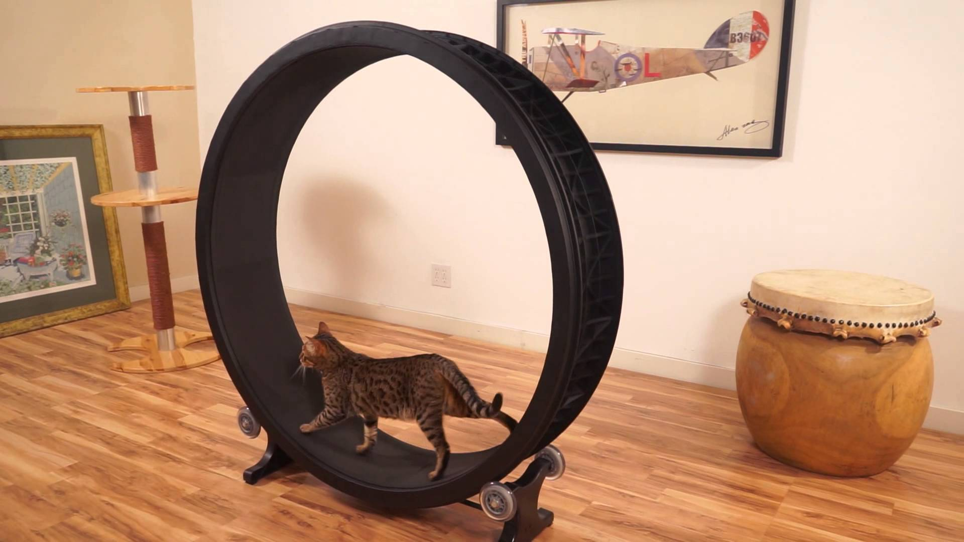 une roue de hamster pour chat. Black Bedroom Furniture Sets. Home Design Ideas