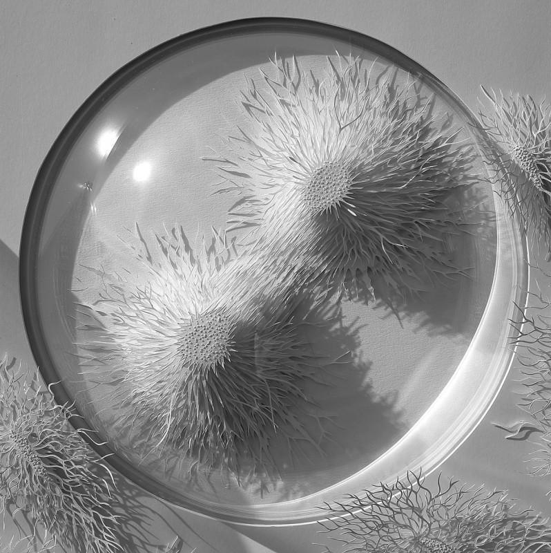 virus-cellule-papier-04