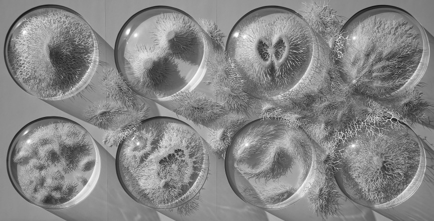 virus-cellule-papier-06