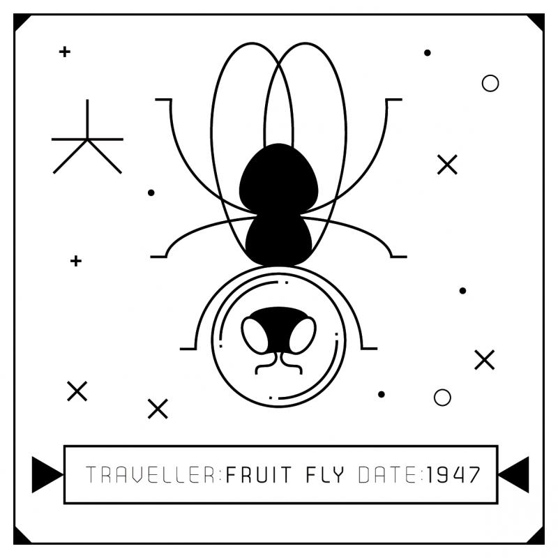 animal-espace-illustration-05