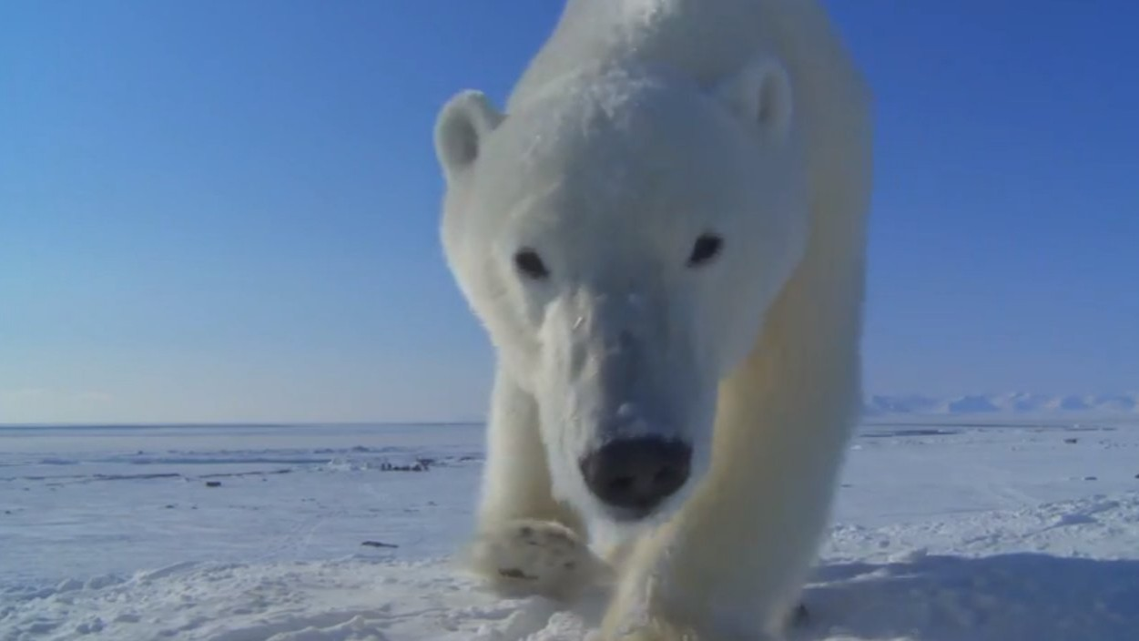 Comment la BBC filme ses documentaires animaliers