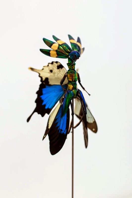 fee-insecte-graine-morceau-assemblage-01