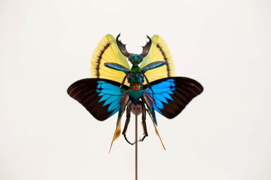 fee-insecte-graine-morceau-assemblage-02
