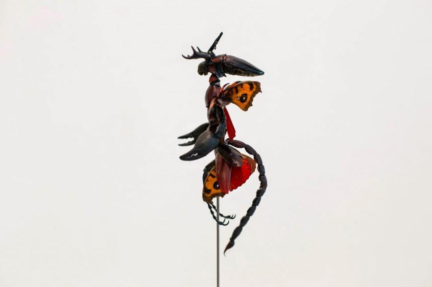 fee-insecte-graine-morceau-assemblage-03