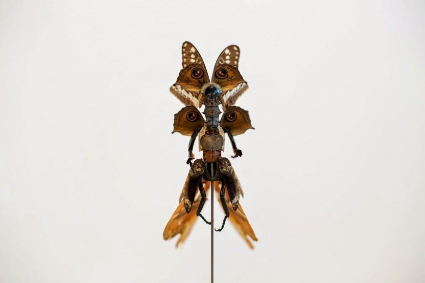 fee-insecte-graine-morceau-assemblage-04