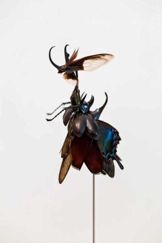fee-insecte-graine-morceau-assemblage-05