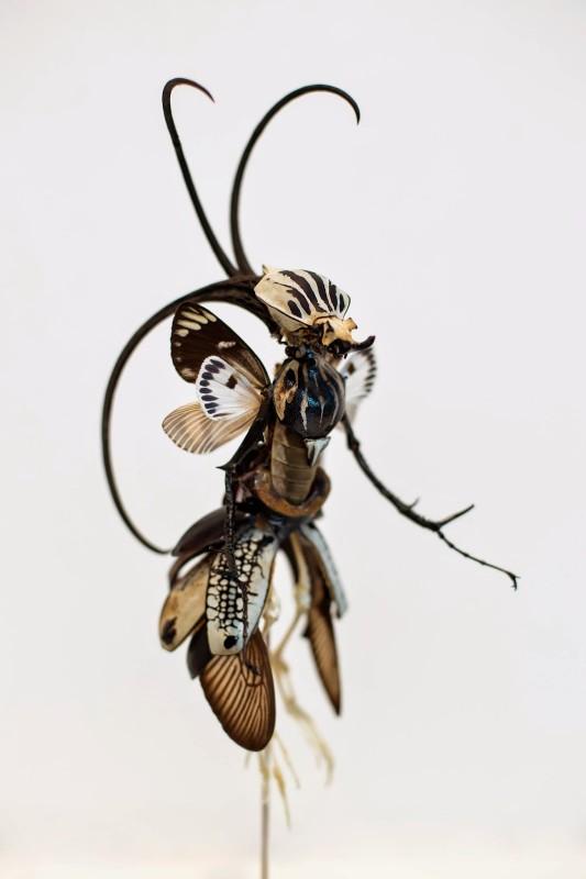 fee-insecte-graine-morceau-assemblage-06