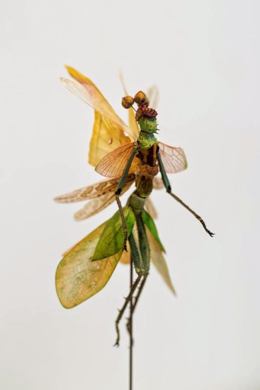 fee-insecte-graine-morceau-assemblage-07