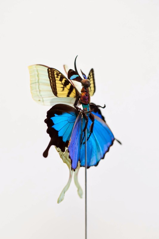 fee-insecte-graine-morceau-assemblage-08