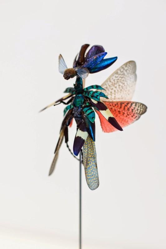 fee-insecte-graine-morceau-assemblage-09