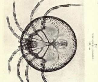nature-photo-microscope-macro-vintage-ancien-30