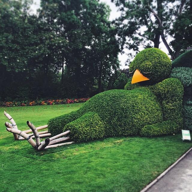 Un poussin endormi à Nantes