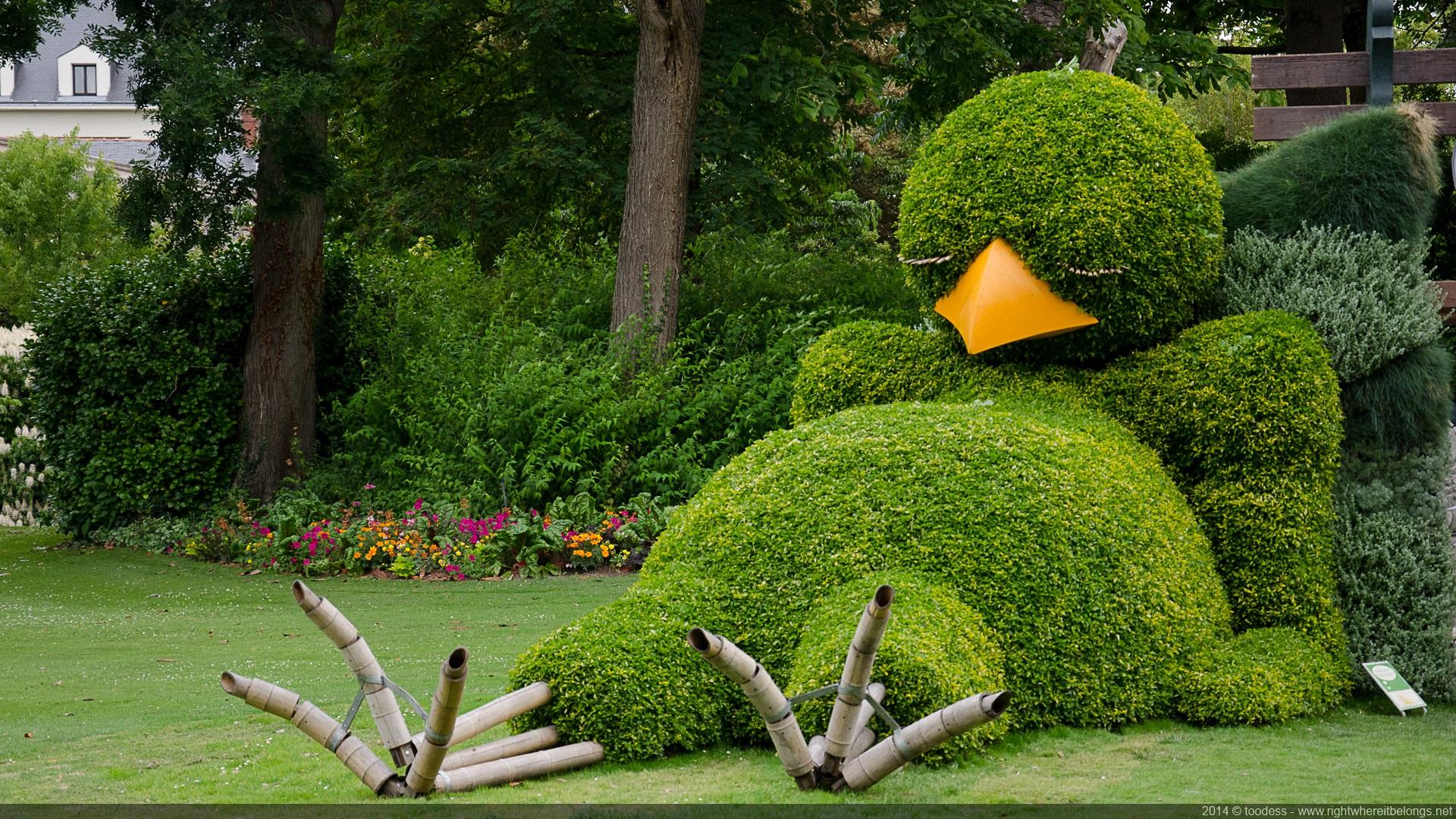poussin-buis-nantes-jardin-plante-02 - La boite verte