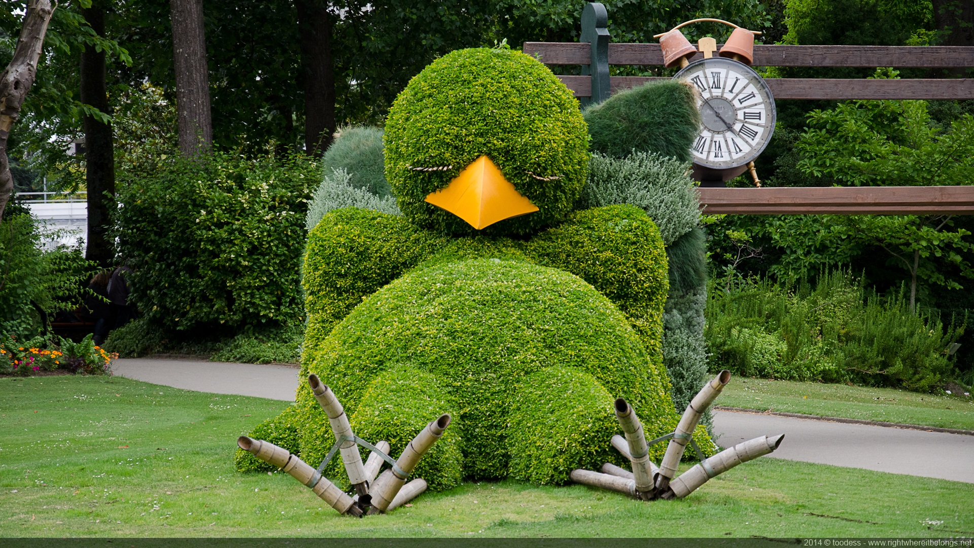 Poussin buis nantes jardin plante 03 la boite verte for Plante jardin