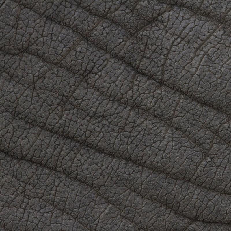 texture-peau-poil-plume-animal-01