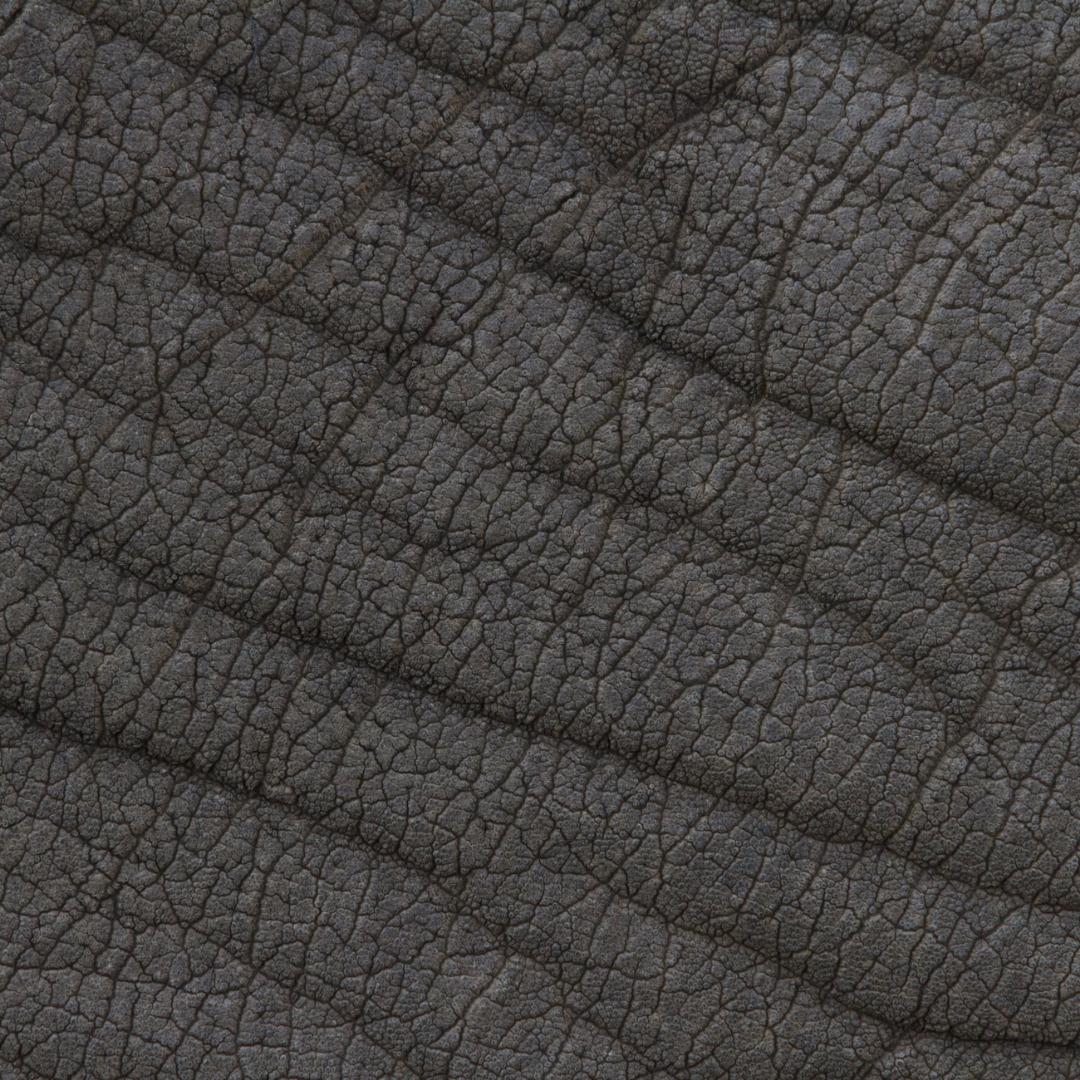 texturepeaupoilplumeanimal01 la boite verte