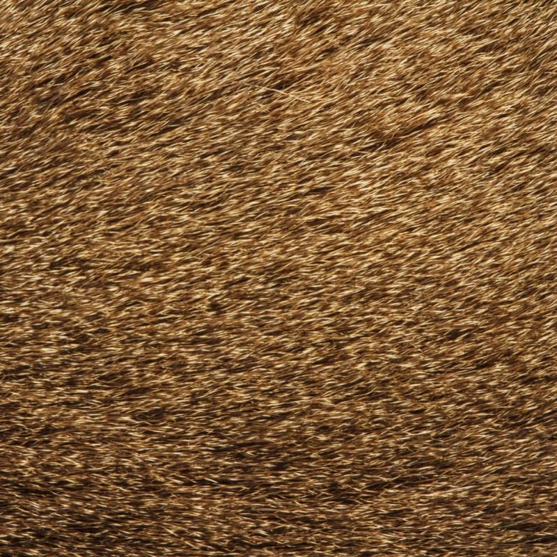 texture-peau-poil-plume-animal-02