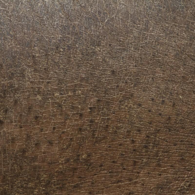 texture-peau-poil-plume-animal-05