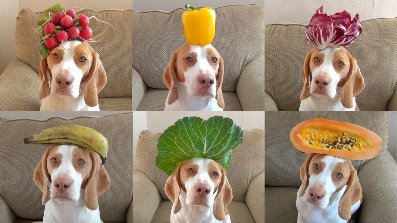 Un chien avec 100 fruits et légumes sur la tête