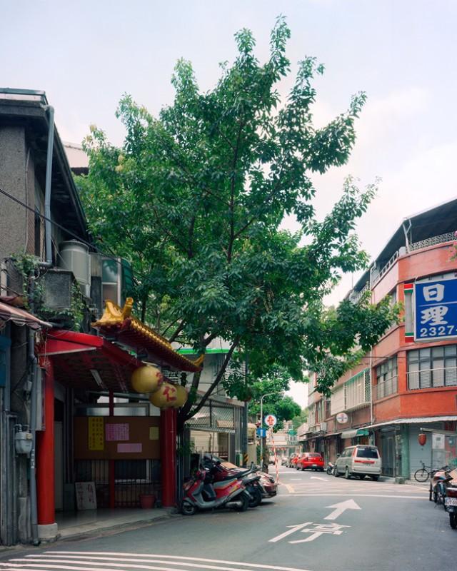 arbre-mur-taiwan-01