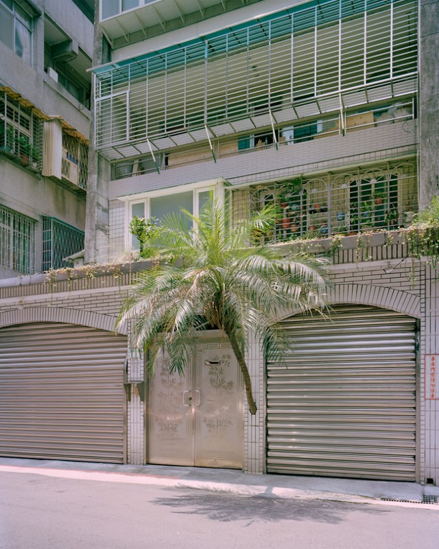 arbre-mur-taiwan-03