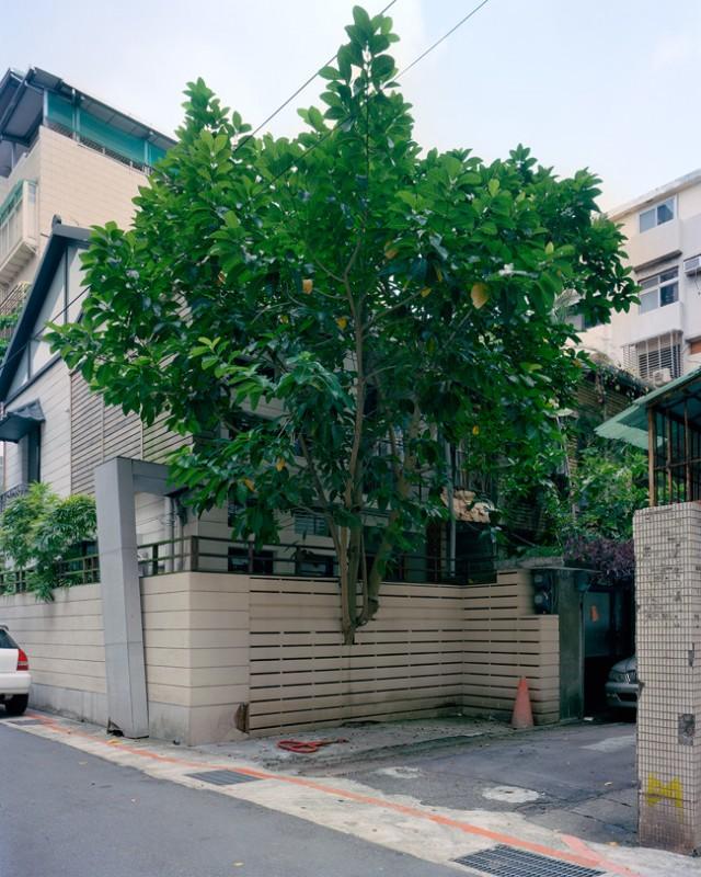 arbre-mur-taiwan-04