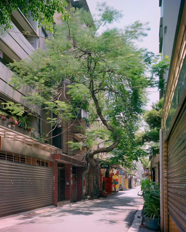 arbre-mur-taiwan-06