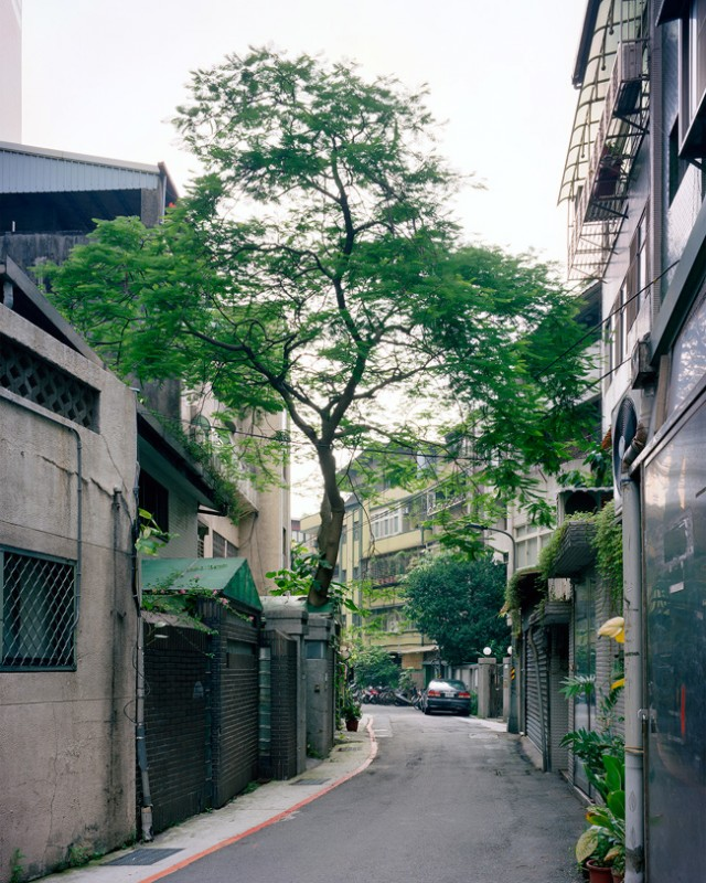 arbre-mur-taiwan-07