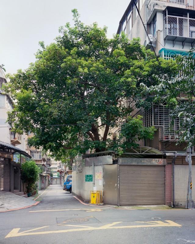 arbre-mur-taiwan-08