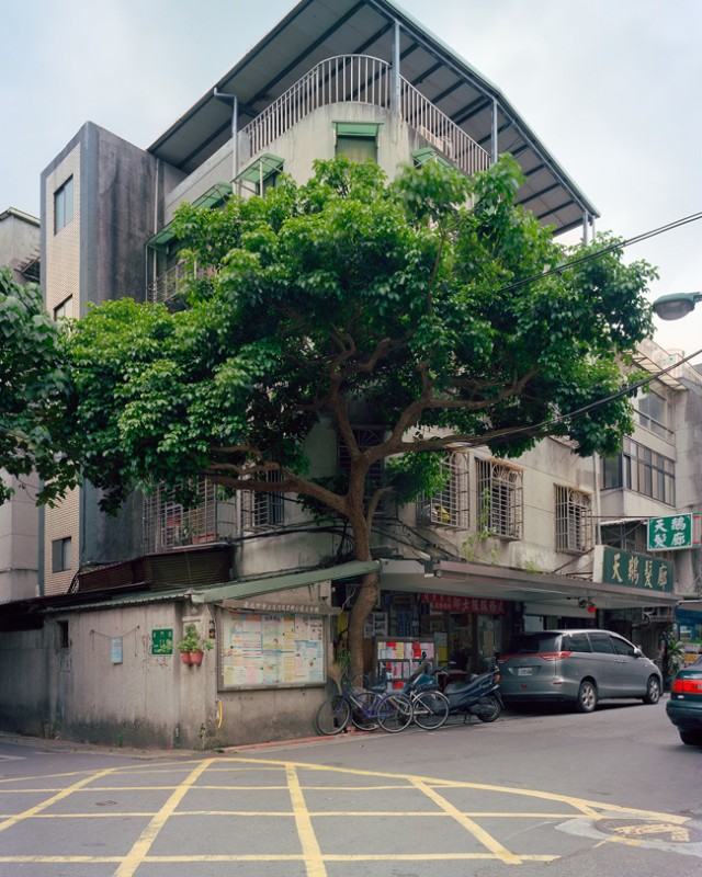 arbre-mur-taiwan-09