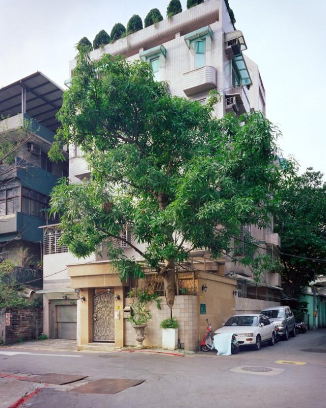 arbre-mur-taiwan-10