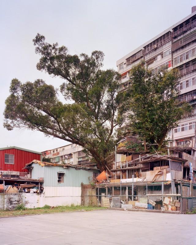 arbre-mur-taiwan-11