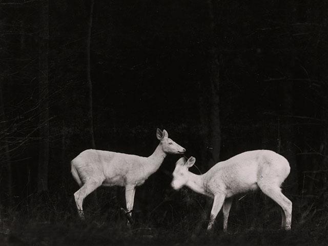 national-geographic-animal-photo-shiras-05