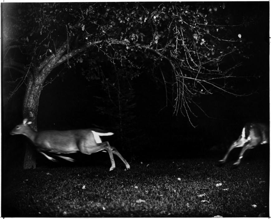 national-geographic-animal-photo-shiras-06