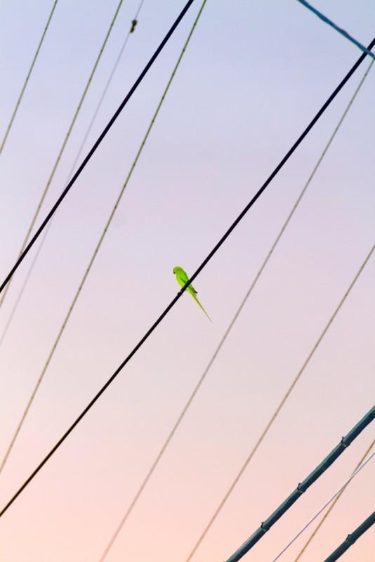 perroquet-tokyo-02