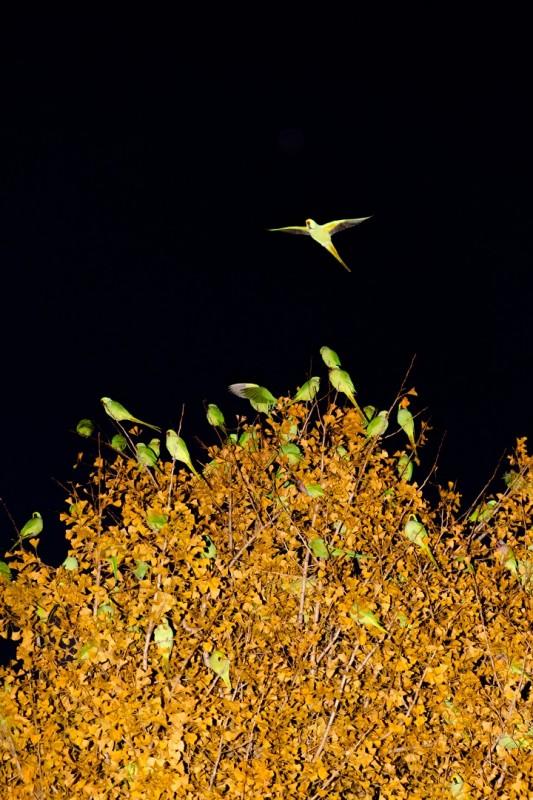 perroquet-tokyo-06