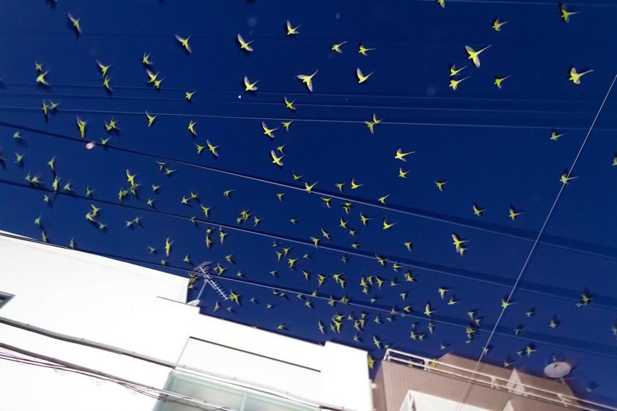 perroquet-tokyo-07