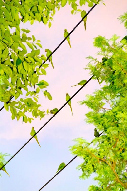 perroquet-tokyo-08