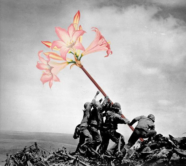 blik-photo-guerre-arme-fleur-01