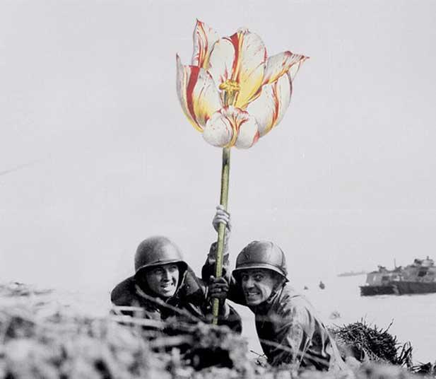 blik-photo-guerre-arme-fleur-02