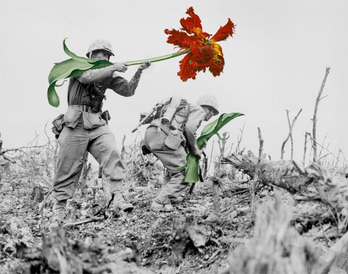 blik-photo-guerre-arme-fleur-03
