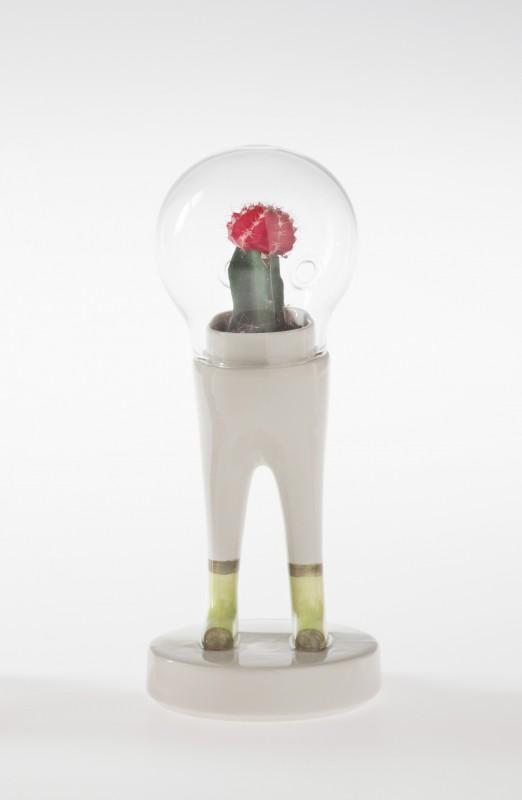 domsai-pied-cactus-01
