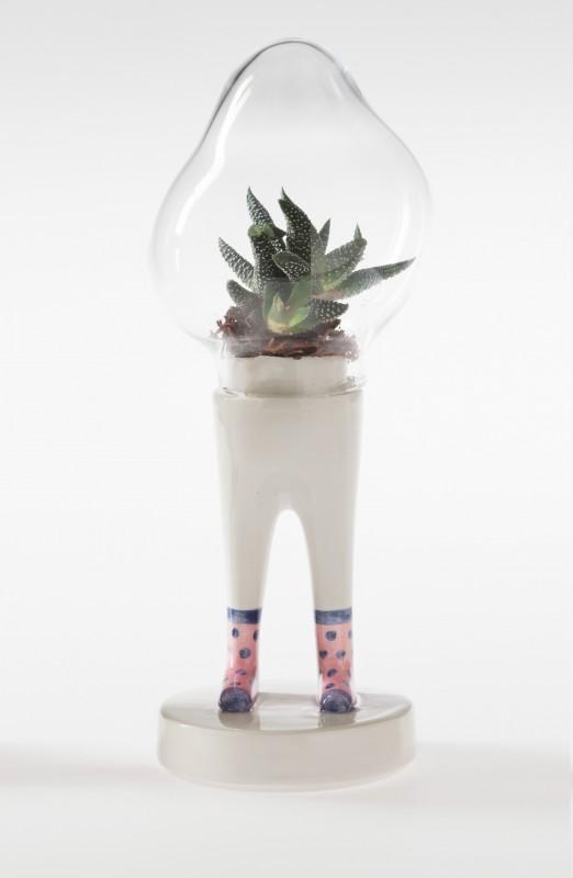 domsai-pied-cactus-02