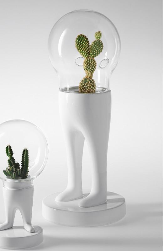 domsai-pied-cactus-04