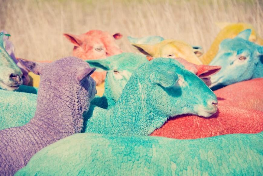 mouton-peinture-couleur-03