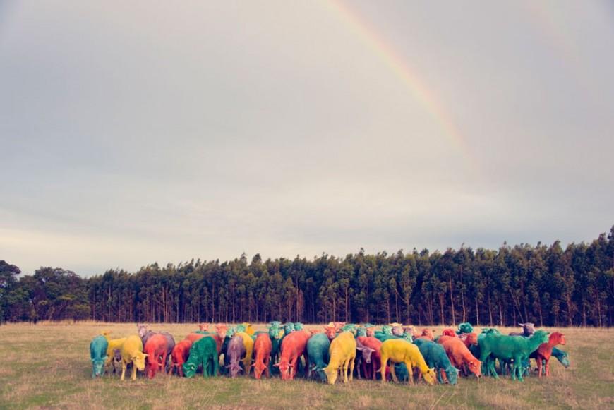 mouton-peinture-couleur-05