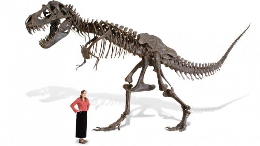 squelette-trex-taille-reelle