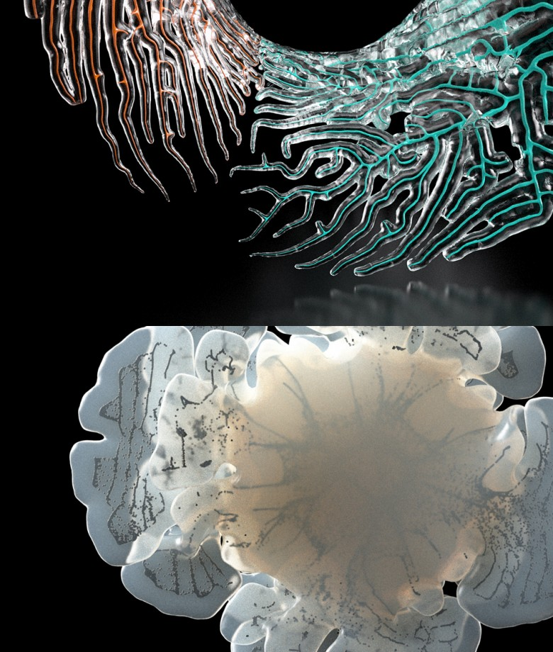 structure-alboristme-11