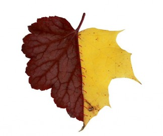chimere-automne-feuille-01